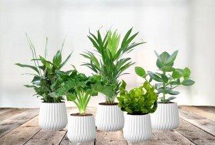 Zestaw 5 roślin pokojowych oczyszczających powietrze